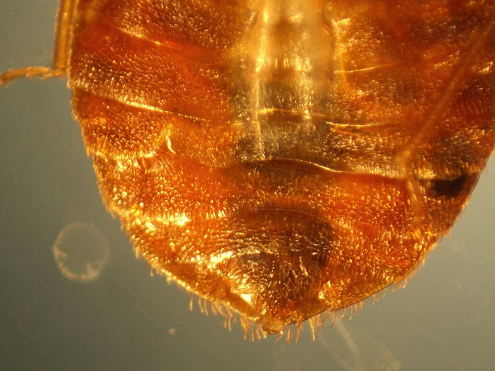 How to Prevent Bed Bugs: The Ultimate Guide