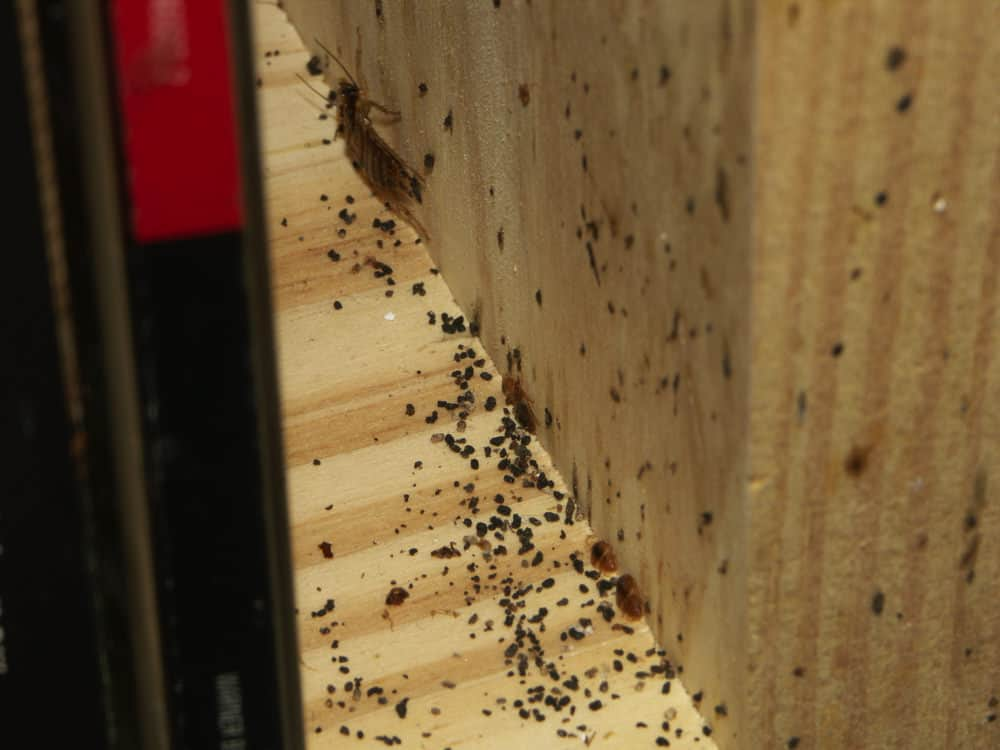 How To Keep Roaches Away Repel Them From Your Home Pestseek