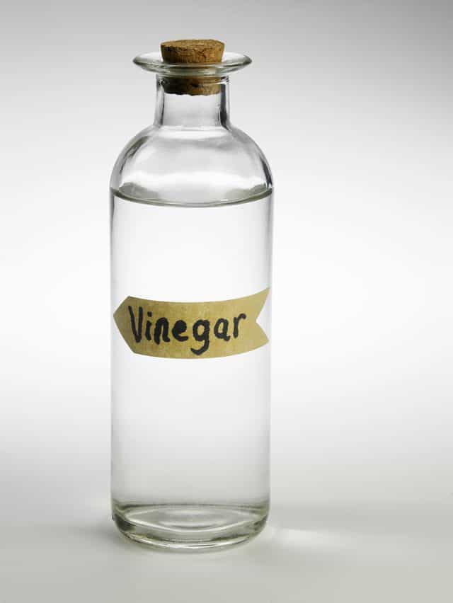 does vinegar kill bed bugs
