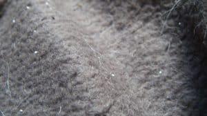 Flea Eggs On Carpet