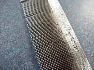 flea comb hair