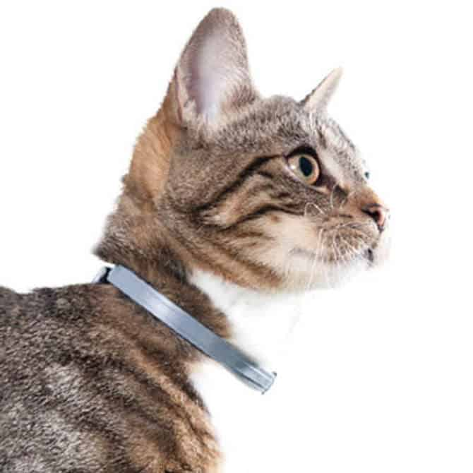 Best Flea Collar for Cats in 2020
