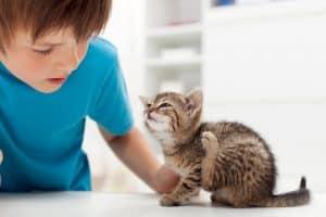 Flea on kittens