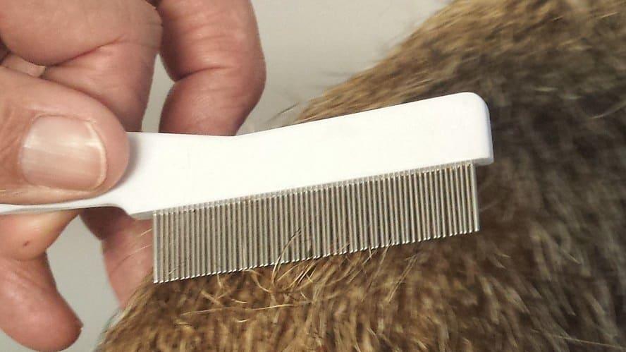 combing for fleas