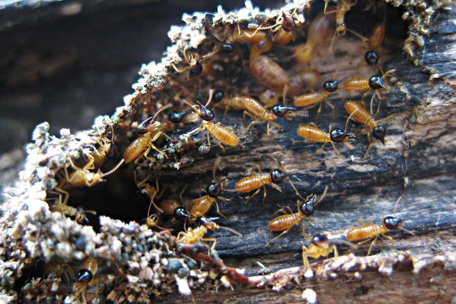​​How To Kill Termites