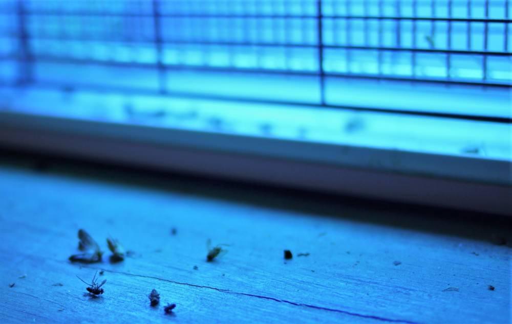 dead mosquitoes near light