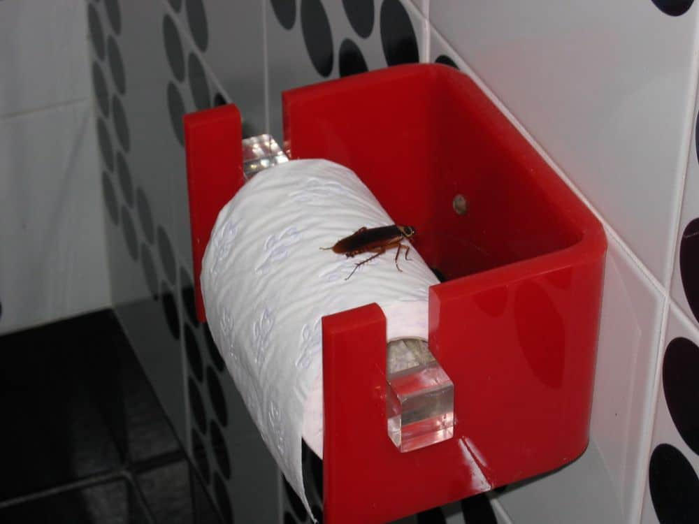How To Keep Roaches Away & Repel Them From Your Home