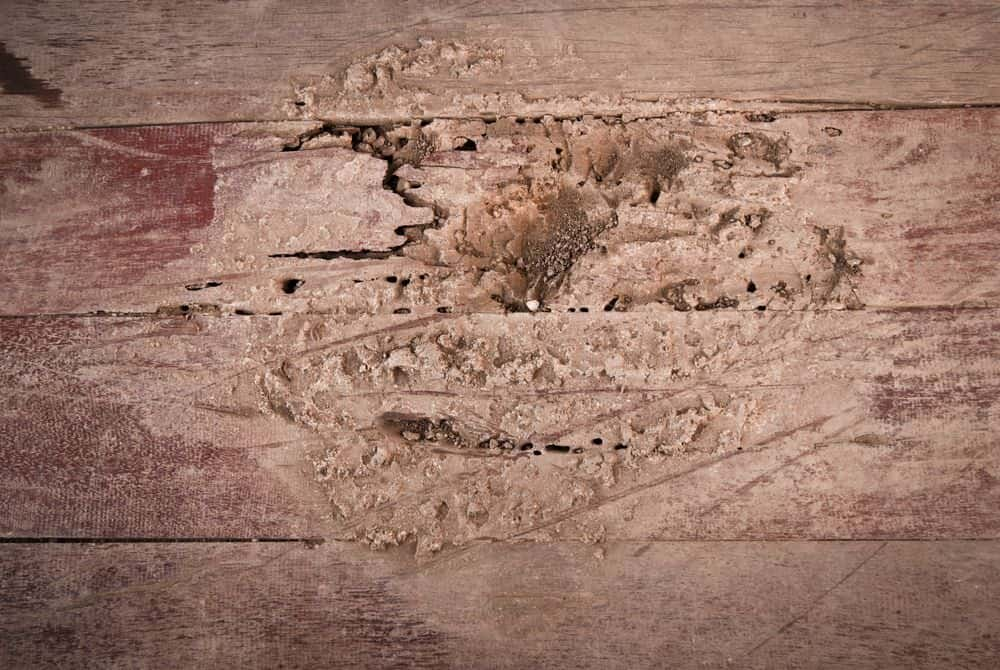 Termite Holes: Everything You Need To Know