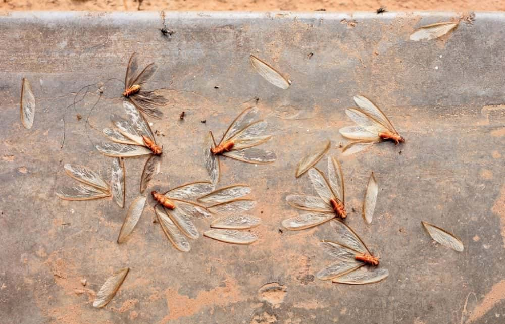 How To Kill Termites: Fast & Effective Methods