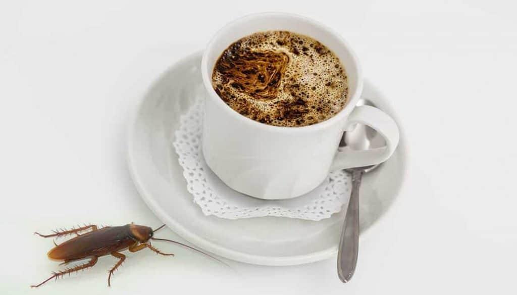coffee roach trap